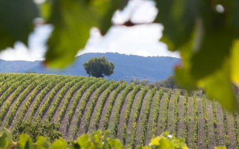 Attractions-Barossa-Valley